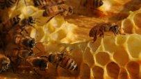 court - honeybee